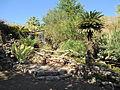 Botanical garden in Eilat (2).JPG