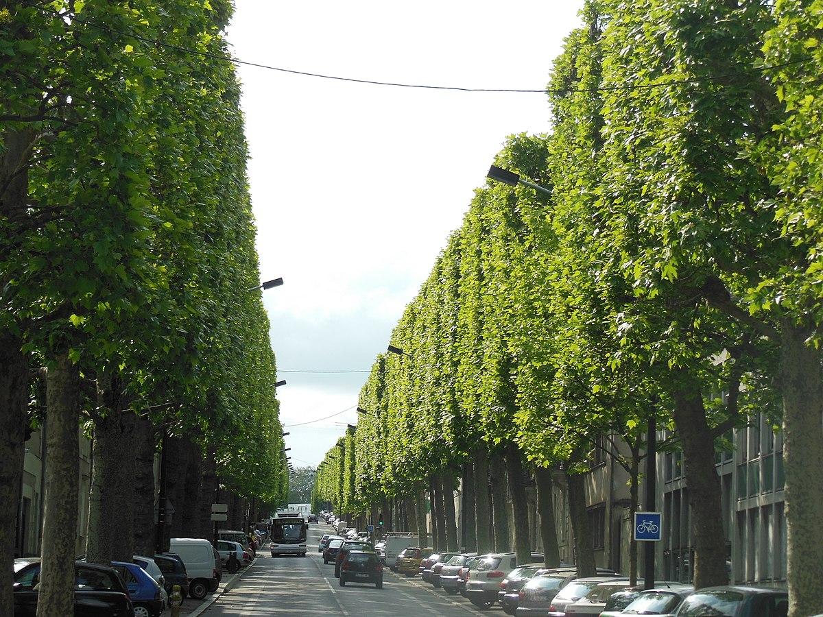 Rue De La Ville En Bois Nantes