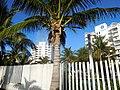 Boulevard Kukulcan, Zona Hotelera, Cancún, Mexico - panoramio (47).jpg