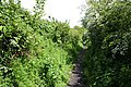 Bridleway near Audlem - geograph.org.uk - 1310938.jpg