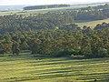 Brigmerston Plantation - geograph.org.uk - 433814.jpg