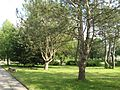 Briukhovychi Arboretum (7).jpg