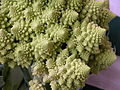 Broccoli DSCN4576.jpg