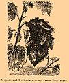 Brockhaus and Efron Encyclopedic Dictionary b76 512-0.jpg