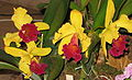 Budapest Orchid Exhibition 2006 20.JPG
