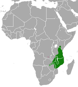 Bushy-tailed Mongoose range(green - extant, pink - probably extant)