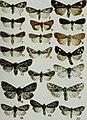 Butterflies and moths of Newfoundland and Labrador - the macrolepidoptera (1980) (20511085445).jpg