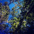 Céu de Pirenópolis.jpg