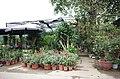 Cửa hàng bán cây cảnh trên đường ven hồ sau đường Thống Nhất, gần ngã tư đường Thống Nhất giao với đường Lê Thánh Tông, thành phố Hải Dương, tỉnh Hải Dương.jpg