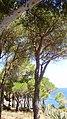 COLERA - panoramio (9).jpg