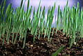 CSIRO ScienceImage 2846 Time delay of grass growing.jpg