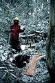 CSIRO ScienceImage 629 SubAlpine Forest in Snow.jpg