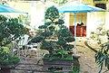 Cafe thanh vy - panoramio.jpg