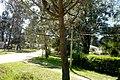 Calle Avenida Nogueira Pinamar - panoramio (10).jpg