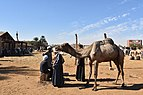 Camel market at Daraw, photo by Hatem Moushir 28.jpg