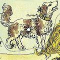 Canis minor.jpg