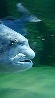 Cape Aquarium 20180719 211909 (14).jpg