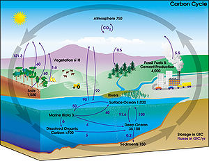 """Diagram of the carbon cycle. The black numbers indicate how much carbon is stored in various reservoirs, in billions of tons (""""GtC"""" stands for gigatons of carbon; figures are circa 2004). The purple numbers indicate how much carbon moves between reservoirs each year. The sediments, as defined in this diagram, do not include the ~70 million GtC of carbonate rock and kerogen."""