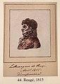 Caricature de Bonabes Louis Victurnien Alexis de Rougé.jpg