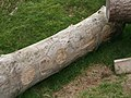 Carvings on the log - geograph.org.uk - 1017486.jpg