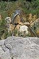 Cascade Glandieu Brégnier Cordon 21.jpg