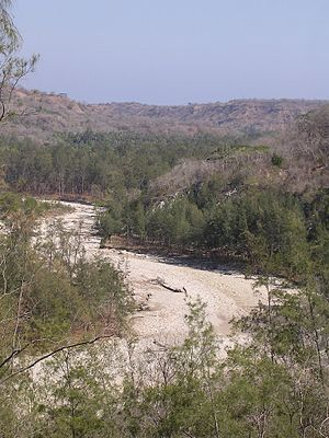 Casuarina forest pattern in late dry season along Laivai River valley, Lautem, Timor-Leste (9 Nov 2004).jpg