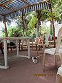 Cat at 'Darya Sarang Resort' on Chivla beach in Malvan..JPG