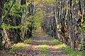 Ceļš ar veciem vītoliem gar malu - panoramio.jpg