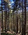 Cedars of Chrea.jpg