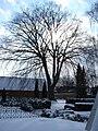 Cemetery in winter - Sct. Mikkels Kirkegård - Slagelse - panoramio.jpg
