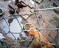 Chó và gà của nhà cậu Cảm ngày 09 tháng 1 năm 2019 (3).jpg