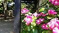 Chadwick Arboretum and Learning Gardens (35753454973).jpg