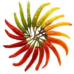 Charleston Hot peppers white background.jpg