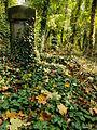 Chenstochov ------- Jewish Cemetery of Czestochowa ------- 56.JPG