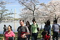 Cherry blossoms - Flickr - Al Jazeera English (11).jpg