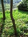 Chidorigafuchi Park 02.jpg