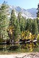 Chilly pond reflection - Flickr - daveynin.jpg