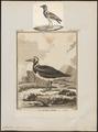 Cinclus interpres - 1700-1880 - Print - Iconographia Zoologica - Special Collections University of Amsterdam - UBA01 IZ17300033.tif