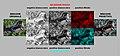 CinemaAColori Analisi sintesi bicromatica rosso ciano.jpg