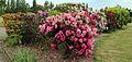 City of London Cemetery - flowering shrubs 10.jpg