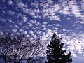CloudsJan2011 (5379327878).jpg