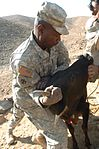 Coalition forces treat 450 Afghans during medical outreach DVIDS66667.jpg