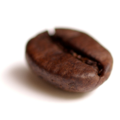 Coffee bean transparent.png