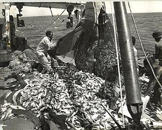 Unsustainable fishing methods