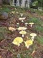 Cook Preserve, Kingston, NJ - panoramio (2).jpg