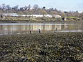 Cormorants on the slipway of the Old Erskine Ferry, Renfrewshire. - panoramio.jpg