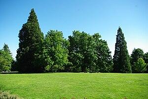 Council Crest Park - Lawn area at the park