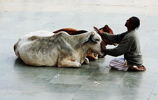 Cow stroker.jpg