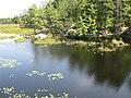 Cranberry Bog Trail (3882252083).jpg