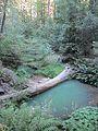 Creek (8045351649).jpg